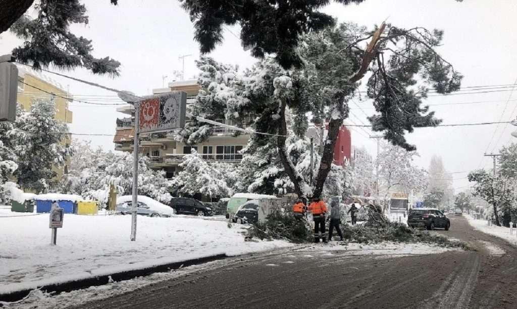 Δέντρα - Ρεύμα - Γραφειοκρατία | Black-out εν μέσω χιονιά