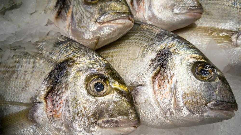 Εξαγωγές Ψαριών | Τουρκία και Μαρόκο απειλούν τις ελληνικές εξαγωγές ψαριών