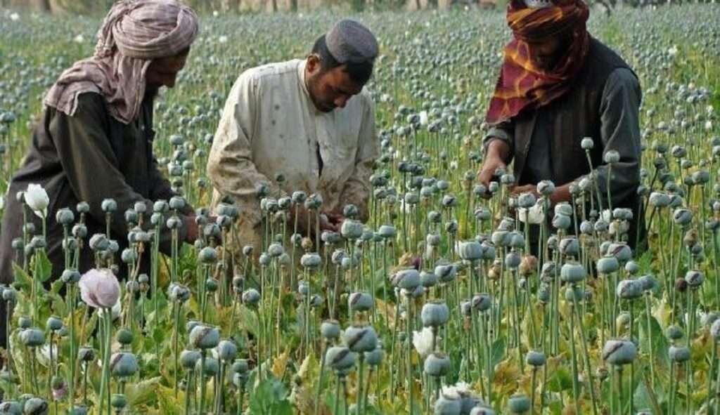 Αφγανιστάν   Οι Ταλιμπάν με το όπιο στο χέρι   Γιατί δεν θα το αφήσουν